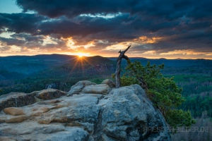 Sonnenaufgang an der Stativkiefer