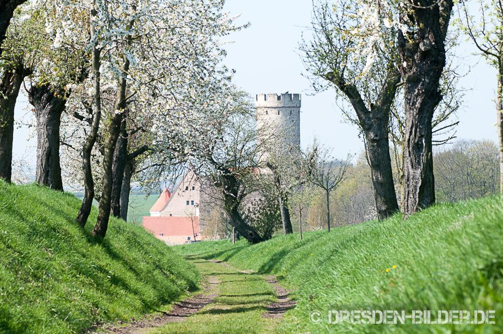 Blühender Frühling in Gnandstein